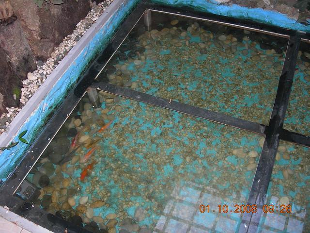 Photo for Floor aquarium