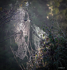Dueling Webs