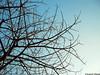 Somente mais uma árvore seca