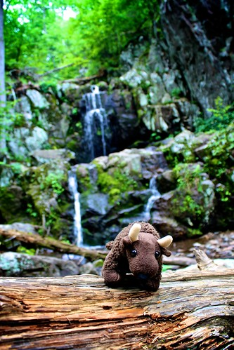 Buddy at Doyle River Falls in Shenandoah National Park