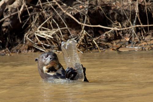 動物經常因為人類製造的垃圾而受影響。圖片來源:Paul Williams