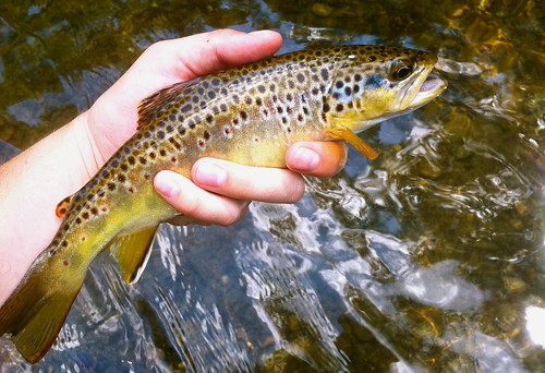 October 2011 backwater angler for Md fishing license cost