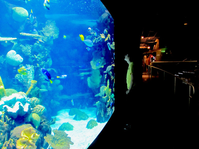 Aquariums In Nh