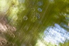 Impression, Bamboo Forest - Primera