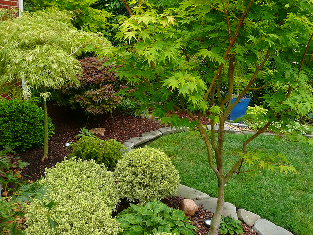 6001470447 bd2c1ac378 for Garden design with japanese maple
