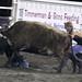 Sarpy Fair Rodeo 486
