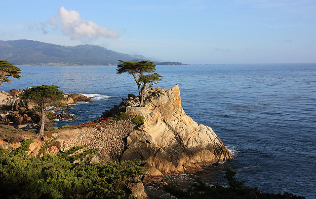 Lone Cypress Tree, 17 Mile Drive, Monterey CA