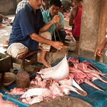 Weighing a Large Sting Ray - Bandarban, Bangladesh