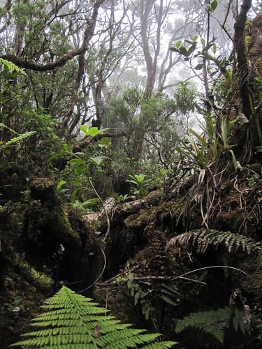 The forest of the Nature Conservancy's Waikamoi Preserve