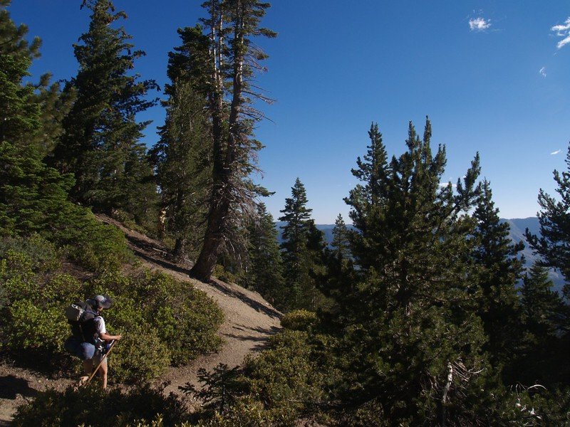 Heading down through the tall pines on the San Bernardino Peak Trail