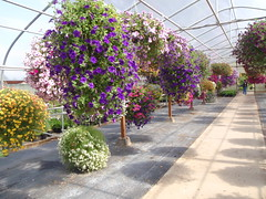 Aisle of Hanging Baskets