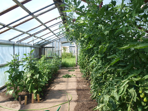 the greenhouse july