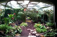 L'espaces des papillons à Micropolis
