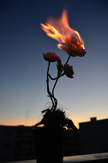 Leegitsev lill/ Flaming flower
