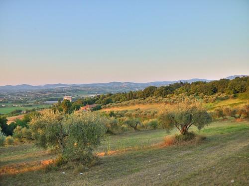 morning trees sky sun sunrise lumix rising countryside riviera estate alba rimini campagna agosto cielo aurora g2 hdr highdynamicrange olivetree romagna mattina campi olivi 2011 rivieraromagnola covignano micro43 lumixg2
