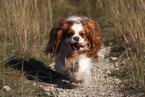 Susie running
