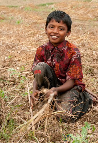 Young Boy Picking Garlic - Hatiandha, Bangladesh