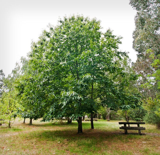 El árbol de la tranquilidad
