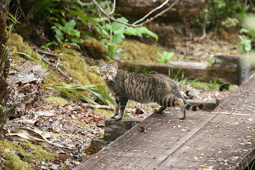 Feral cat in the forest.