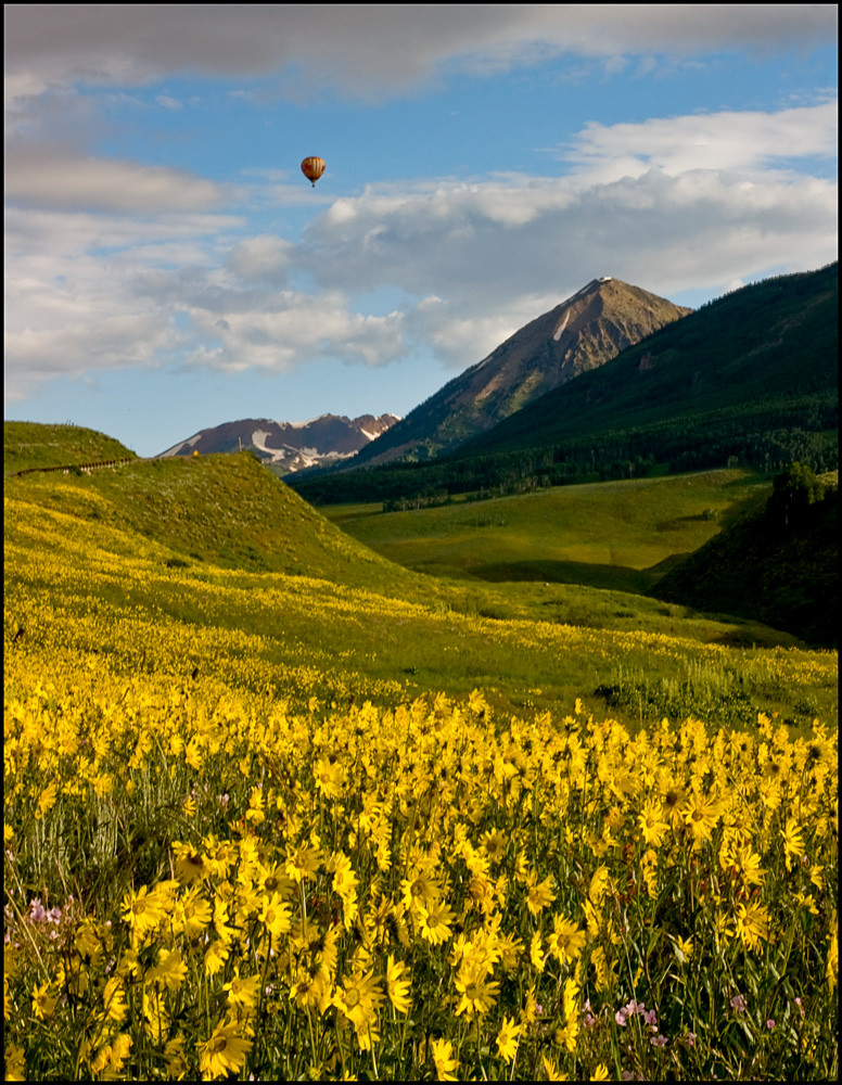 df5daecb0 Crested Butte Wildflower Festival