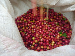 pink peppercorn, berry, produce, fruit, food, cranberry,