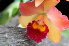 Flores e Fungos