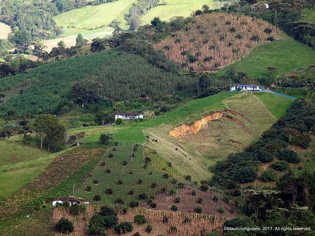 Cultivos & Erosion