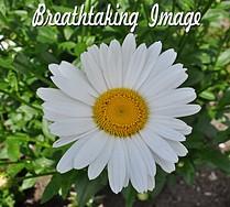 tn_DSC_0786   July 1 2011 breathtaking image