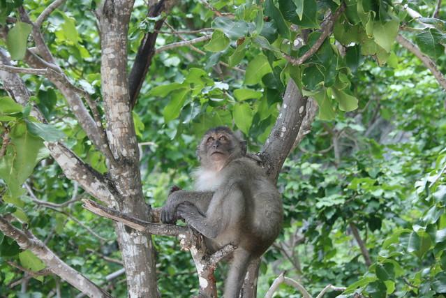 Monkey Island Homes For Sale