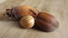 chestnut(0.0), vegetable(0.0), coconut(0.0), shallot(0.0), hazelnut(0.0), nuts & seeds(1.0), produce(1.0), food(1.0), nut(1.0),