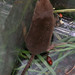 Common Shrew - Photo (c) Mike Richardson and Sarah Winch, some rights reserved (CC BY-NC-ND)