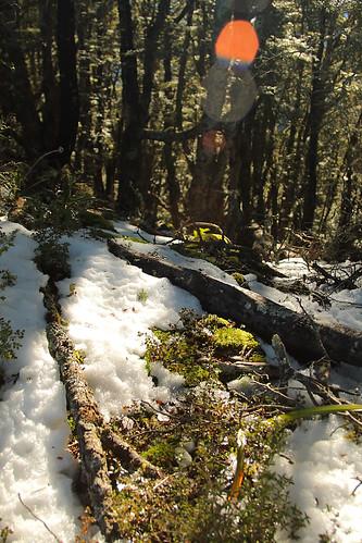 trees winter snow forest canon moss dslr polariser 400d canonef2485mmf3545usm
