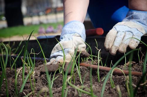 Gardening Blog Photo1