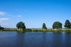 Bomen langs de Amstel