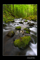 Morning Magic, Gorton Creek, Or.  05-23-11