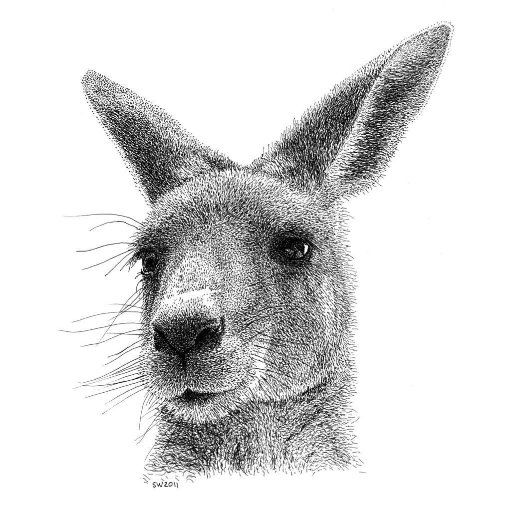how to draw a kangaroo face