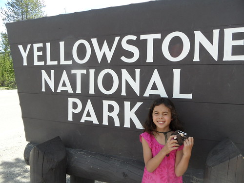Buddy Bison and friend at Yellowstone National Park