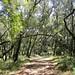 Pulgas-Ridge-2011-07-24