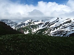 Snowy peaks and bunchberry