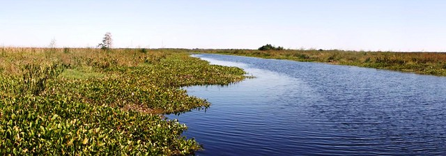 Backfilled canal - Yankee Pond in Jean Lafitte National Park