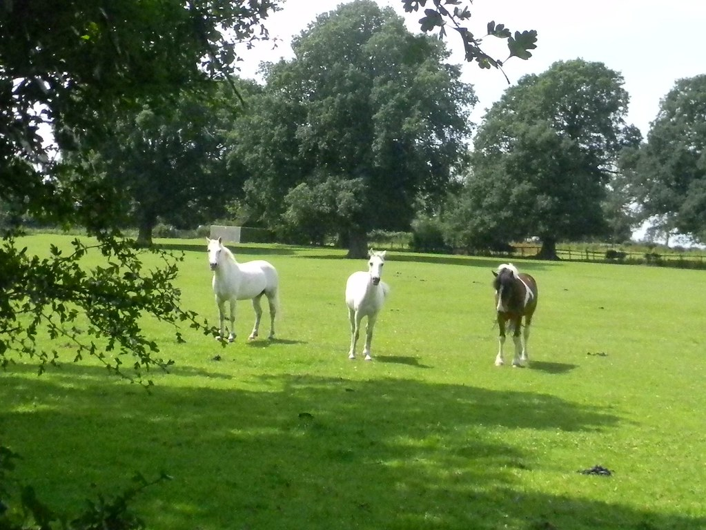 And don't come back These spooky horses escorted us menacingly through their field. Pluckley circular