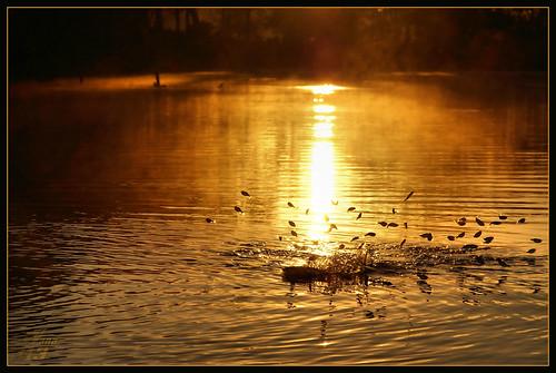 park fish sunrise fry texas bayou pasadena bayareapark armandbayou wanam3
