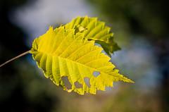 Tasty Leaf