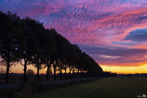 road orange netherlands clouds sunrise purple nederland wolken oranje weg silhouttes paars noordbrabant wintelre zonsopkomst silhouetten bracom bramvanbroekhoven