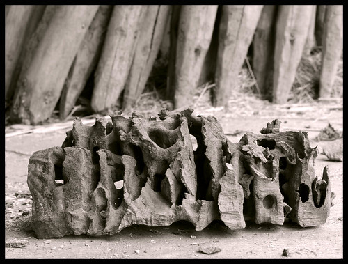 WOOD FORMED BY ANTS or SKULL OF AN UNKNOWN ANIMAL . . . ?
