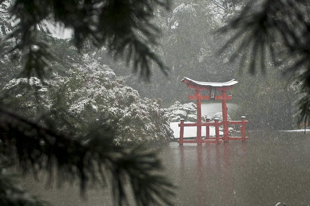 Snow falls on the Japanese Hill-and-Pond Garden during Ghouls & Gourds 2011. Photo by Mike Ratliff.