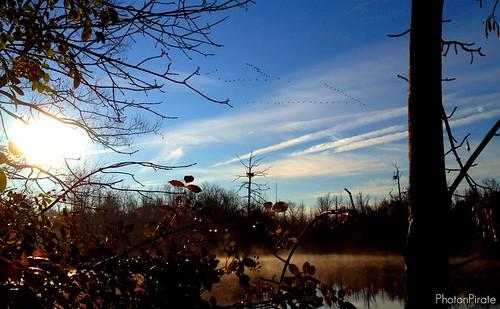sky mist reflection sunrise geese pond migration vformation sapsuckerwoods