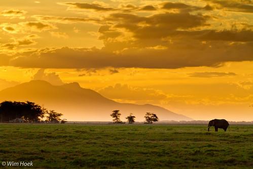 travel sunset oktober elephant kenya wildlife parks safari nationalparks kenia olifant schemering amboseli 2011 naturereserves natuurgebieden republicofkenya diereninhetwild