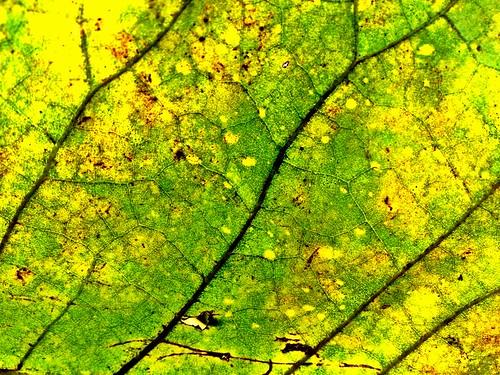 fall leaf magnolia iphone