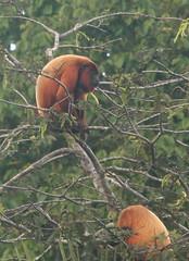 Guyana-0091